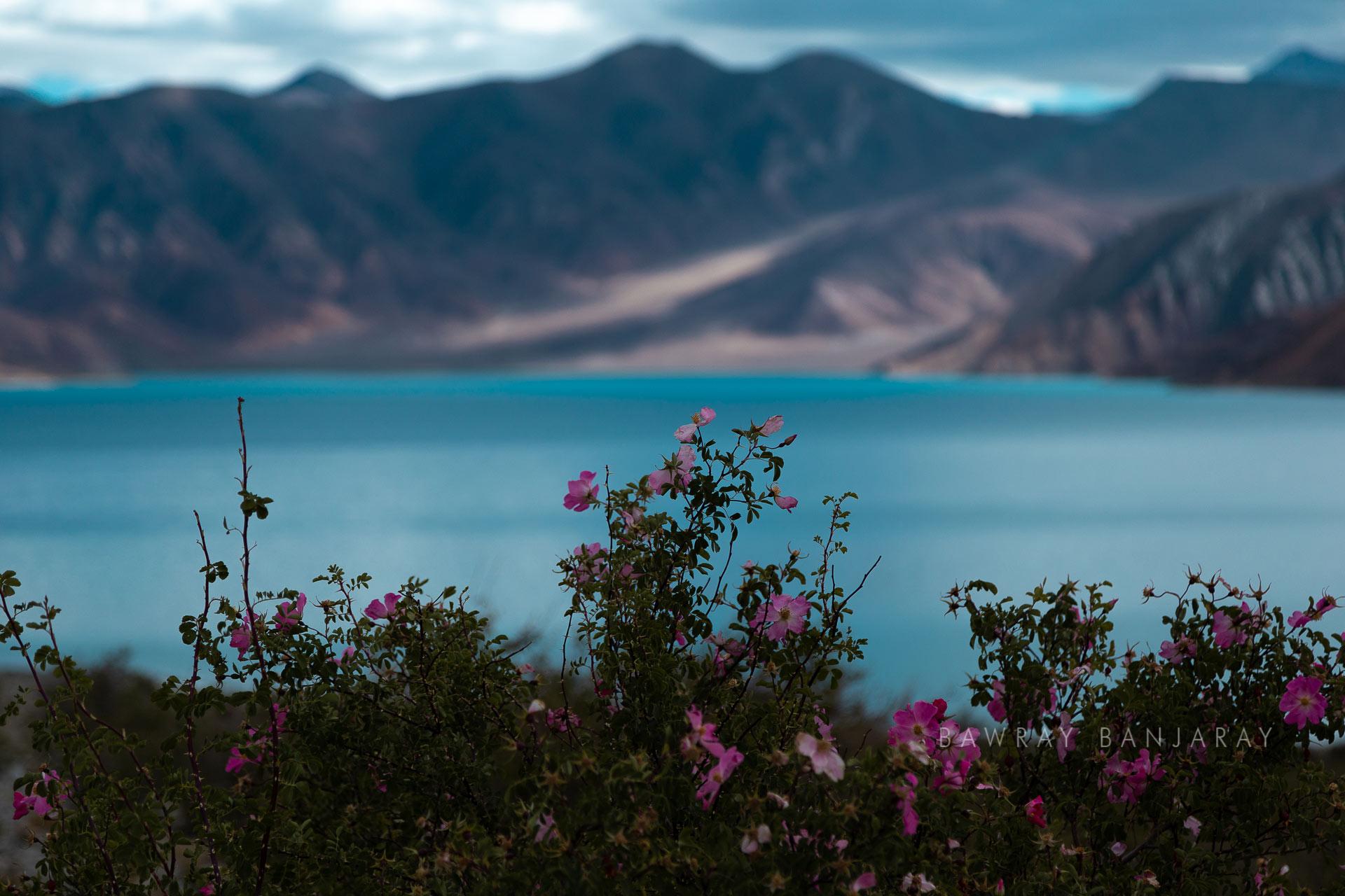 Views of treks in ladakh